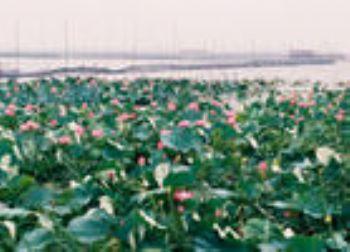 淮南焦岗湖生态旅游度假区门票详细介绍,淮南焦岗湖生态旅游度假