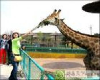 沈阳冰川动物乐园门票详细介绍